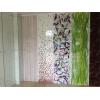 彩釉玻璃SILKSCREEN TEMPERED GLASS